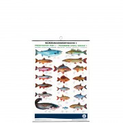 profifan Süßwasserfische I