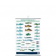 profifan Süßwasserfische II