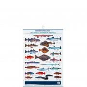 profifan Meeresfische